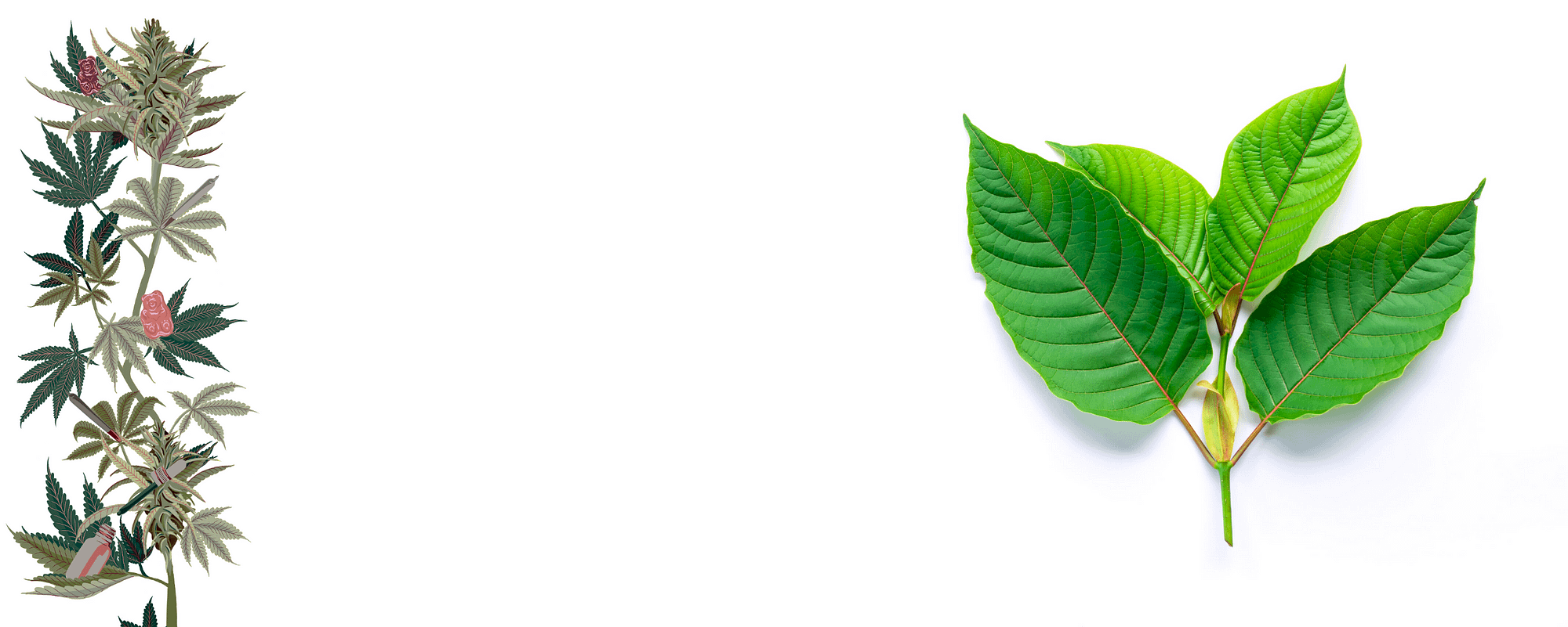 Qué sabemos sobre la combinación de Kratom y Cannabis