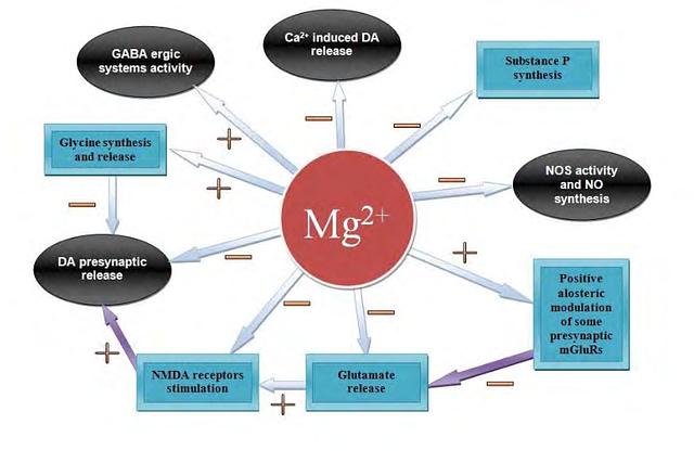 Diagrama que ilustra los efectos del magnesio a nivel de SNC